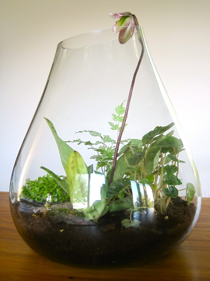 17 best images about glass bowl gardens on pinterest