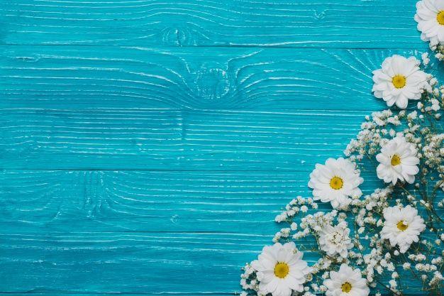 Vista superior do fundo de madeira com margaridas Foto gratuita
