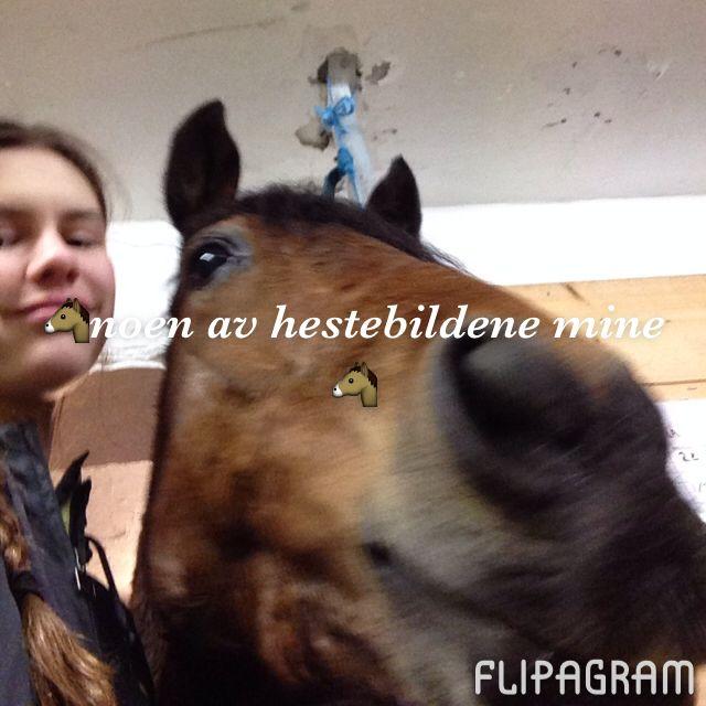 Hest er best vettu!