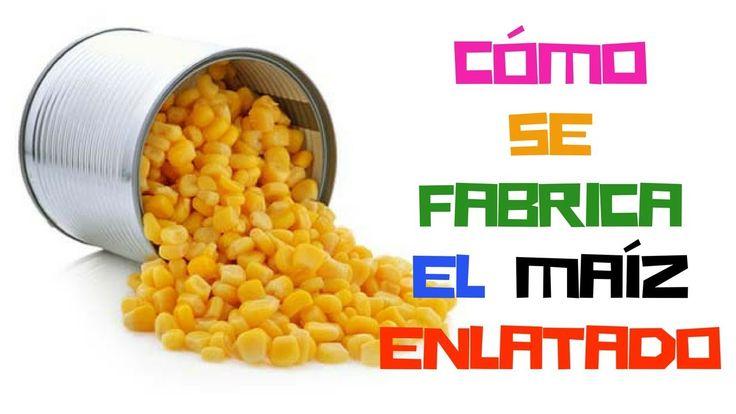 Cómo se hace el maíz dulce enlatado #alimentación #fabricación #maíz #curiosidades #curiosity #curiosfera @curiosfera