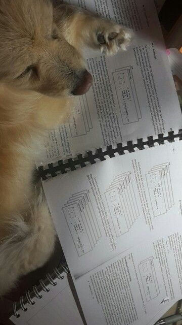 When your dog studies harder