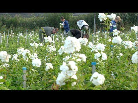 Summerflowers Promo - Kwekerij T.C. Prins