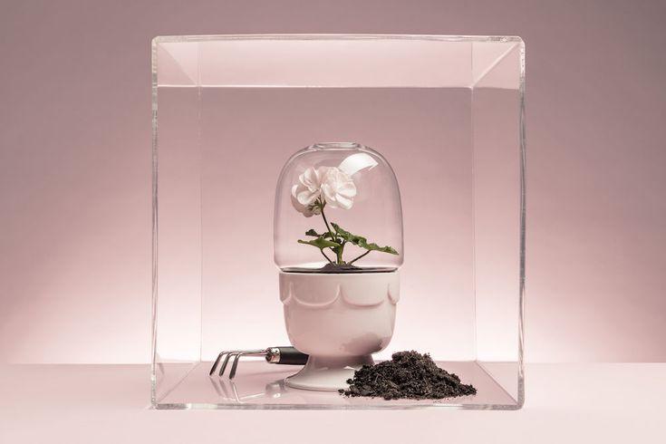 http://www.scandinavianshoppe.com/store/Search.aspx?SearchTerms=flower%20pot