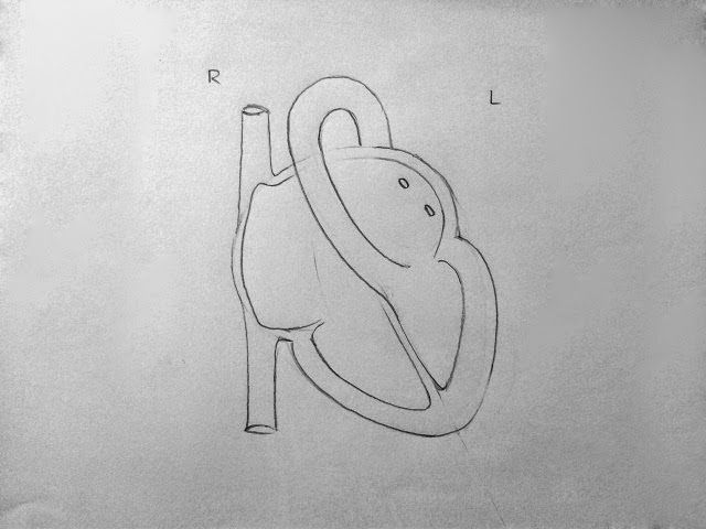 Human Heart Drawing Simple Step By Step