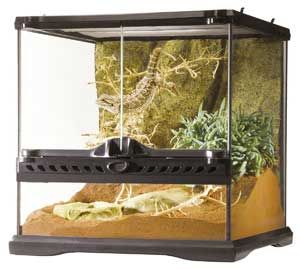 40 best images about critters on pinterest vivarium leopard gecko habitat and turtle enclosure. Black Bedroom Furniture Sets. Home Design Ideas