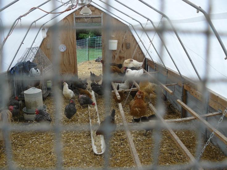simple chicken coop in hoophouse