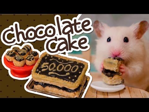 Guinea Pig Safe Cake Recipe