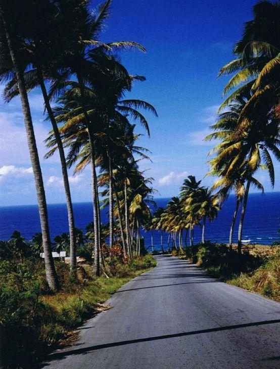 Barbados     www.homeinstbarts.com #Villas in #StBarts for #rent