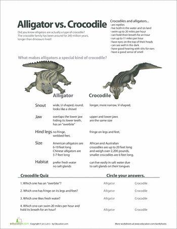 25 best ideas about crocodile habitat on pinterest alligator crafts crocodile craft and. Black Bedroom Furniture Sets. Home Design Ideas