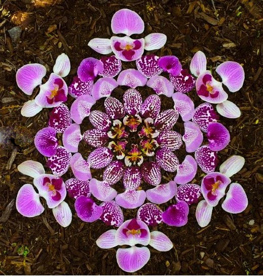 Kathy Klein's flower danmala on Hipsters for Sisters blog #environmental #art