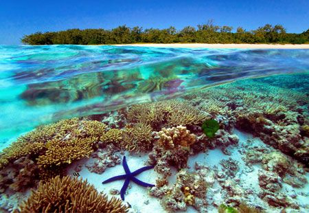 Great Barrier Reef, Australia... Especially since it's being destoryed by dangerously high carbon-dioxide levels and may not be worth visiting much longer. :(