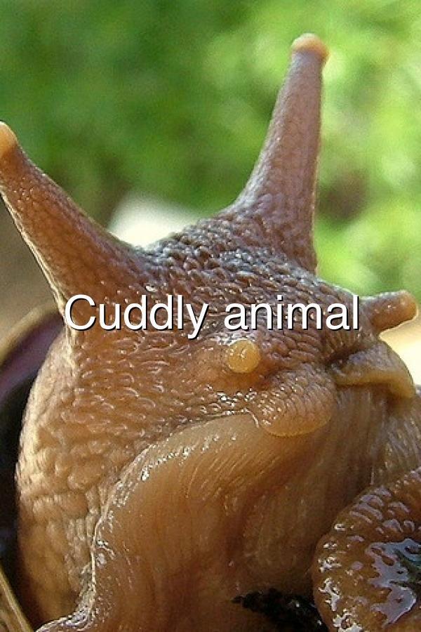 Cuddly Animal In 2020 Cuddly Animals Annelid Cuddly