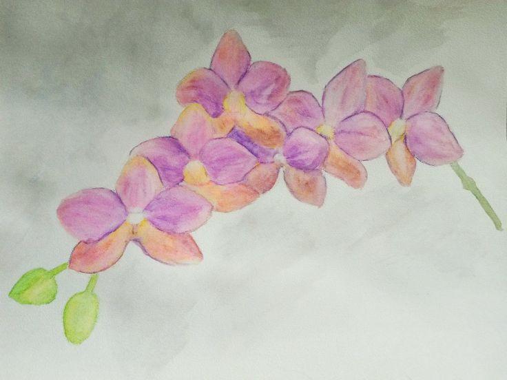 Dreamer: Орхидея