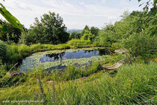 Bei einem derart gut eingewachsenen Schwimmteich sind Algen in der Regel kein Problem mehr, das System ist im Gleichgewicht. Dieser Schwimmteich von Werner Gamerith war der erste in Österreich und wurde 1983 angelegt. (Schwimmteich Teich Naturgarten Naturschwimmteich nature garden swimming pond)