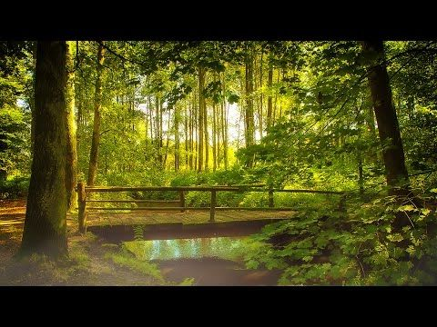 Relaxing Nature Sounds Forest - Meditation Study Sleep Spa Water Sounds Bird Song 12 HOURS - YouTube