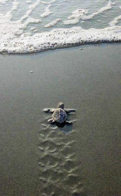 Watching sea turtles hatch is on my bucket list☀️                              …                                                                                                                                                                                 More