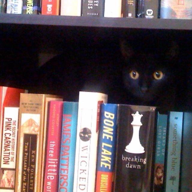 Um, I love books too....this kitty looks like my BC........