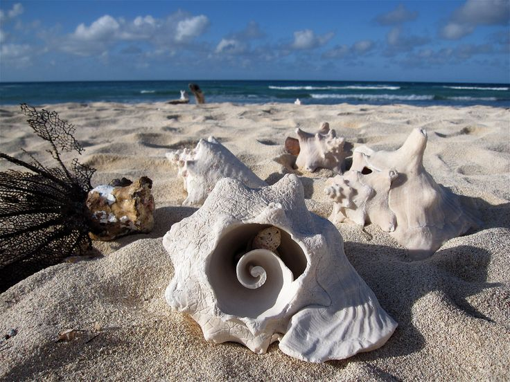 Sea Shells on the sea shore | Flickr - Photo Sharing!