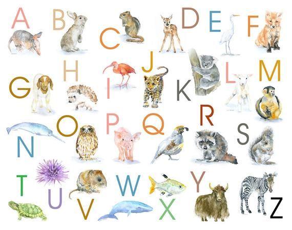 Animal Alphabet Poster Watercolor Animals 14 X 11 Wall Art Nursery Art Abc Nursery Art Watercolor Nursery Animals Alphabet Poster Animal Alphabet