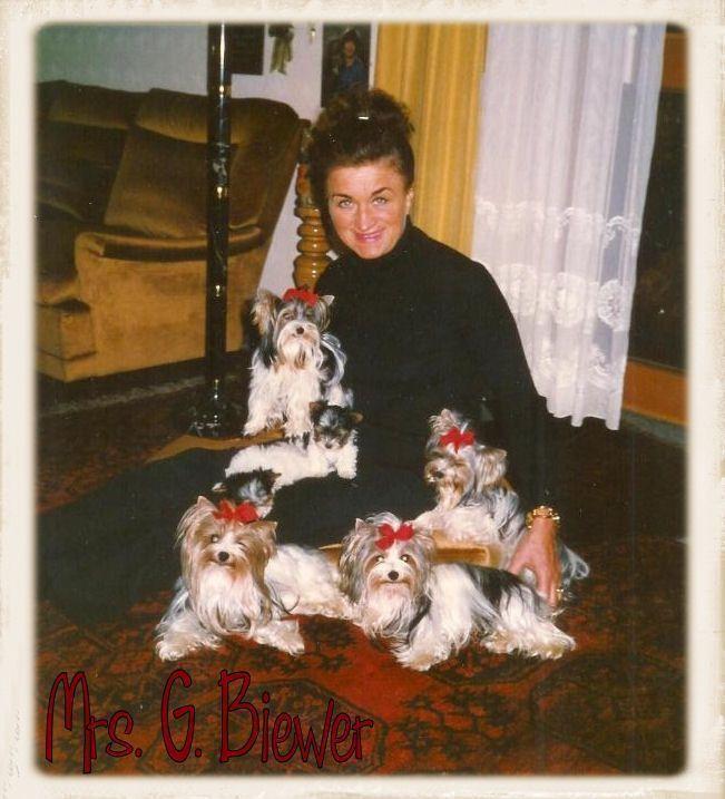 Biewer Terrier Breeders Biewer A La Pom Pon Biewer Puppies For