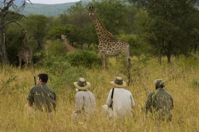 Encountering big game on foot will give you a new appreciation for the size and grace of the African wildlife.