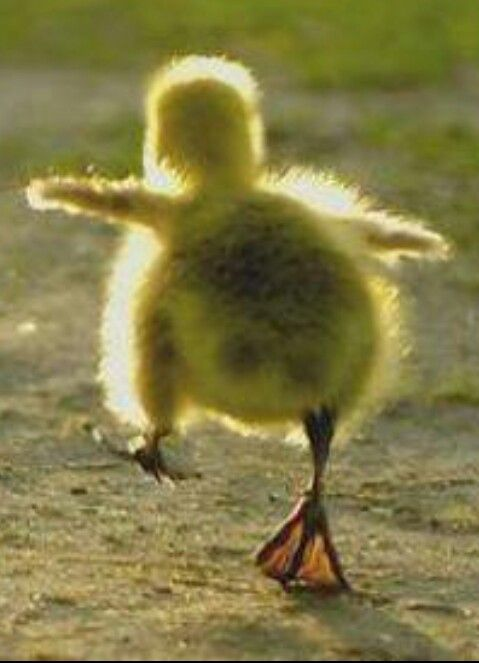 130 Best Dancing Animals Images On Pinterest Fluffy Pets