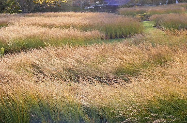 144 best piet oudolf images on pinterest contemporary for Ornamental prairie grass