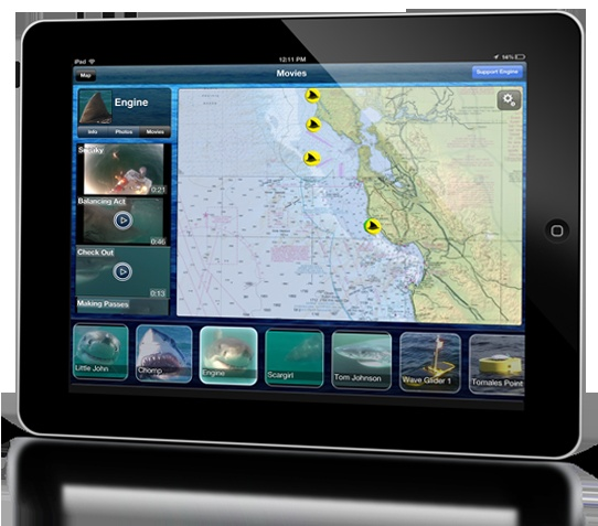 The app will notify users when a white shark passes within 1,000 feet or so of a listening device. (Stanford University)