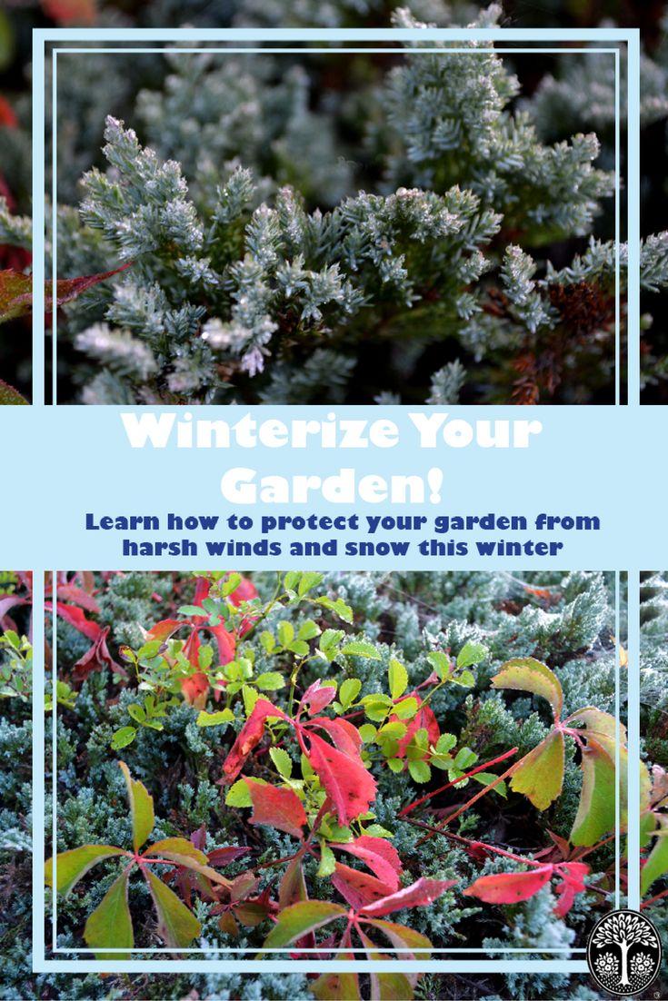 52 best winter garden images on pinterest winter garden winter
