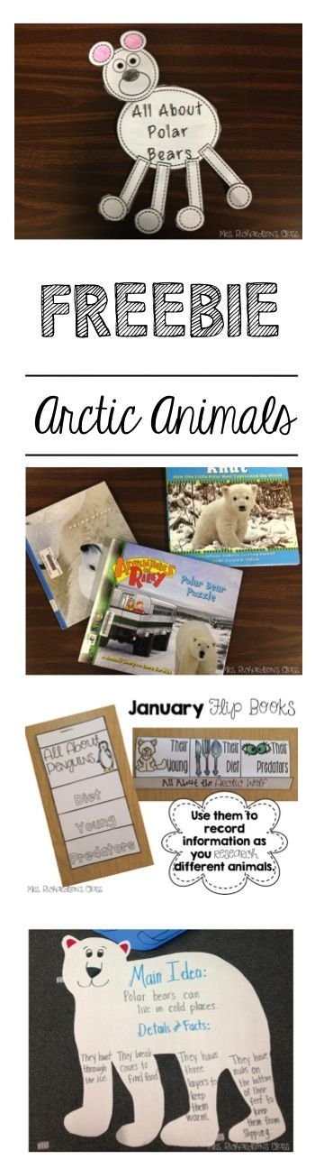 Arctic Animals, polar bears, arctic read alouds, flip books, interactive notebooks. Lots of great resources to keep your students engaged! #mrsrichardsonclass #primarypower