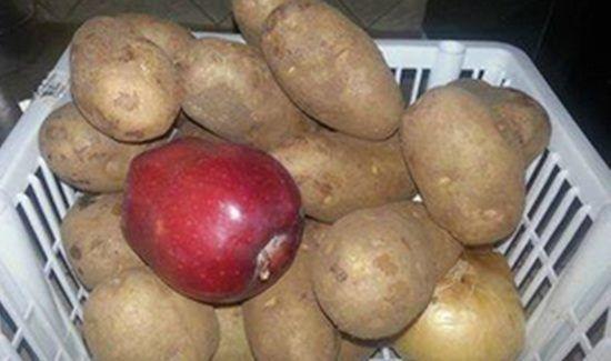 Mettez une pomme avec les pommes de terre pour les conserver plus longtemps