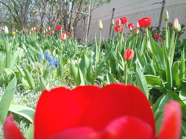 Végre eljött a tavasz! :)