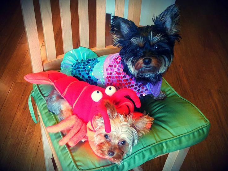 10 best Cutest Dog Halloween Costumes Ariel & Sebastian ...