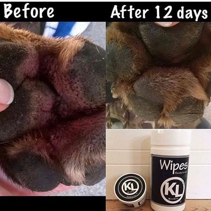 After 12 days treatment with KovaLine  .  #kovaline #secondtonone #beforeandafter #animal #animals  #pet #pets #petstagram #allergies #eczema #paws #dog #dogs #doggy #dogstagram #hund #hunde #chien #perro #cane #bulldog #mastiff #horse #horses #hest #häst #beforeandafter #vet #veterinarian  #veterinary . . Pure & Simple. Gentle skincare