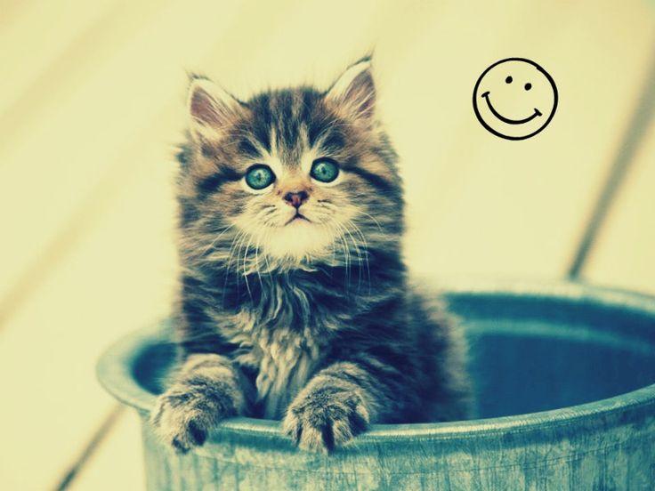 Kitty!