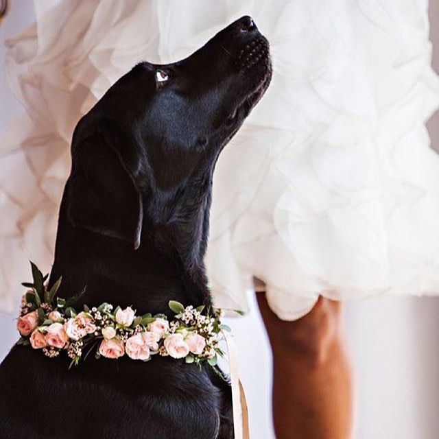 Rainy days are always better with #flowers and #puppies. How adorable is this pup from @modernweddingmagazine? #labrador #weddings #pink #garland #sweet #dogsofinstagram