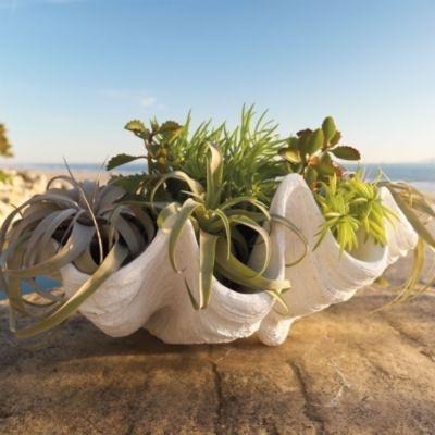 Seashell Outdoor Planter: Decor, Seashells Planters, Seashells Outdoor, Beach House, Grandin Roads, Hues Design, Gardens, Giants Clams Shells, Outdoor Planters