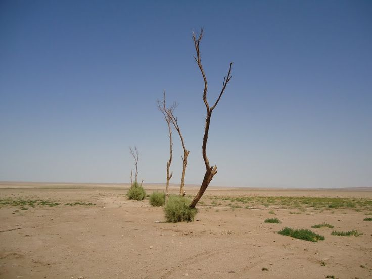 Panoramio - Photo of Desert trees - درختهای کویری