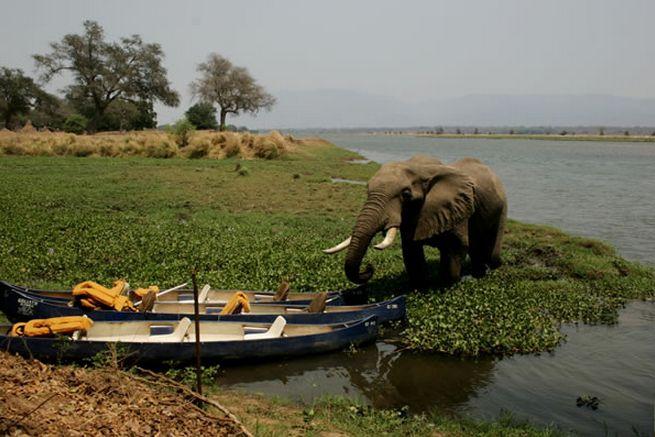 #goliathsafaris #manapools #zimbabwe #safari #africa #camp #tent #off2africa #holiday #elephant #canoe #zambezi