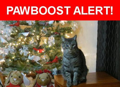 Please spread the word! Jimmy was last seen in Boise, ID 83706.    Nearest Address: Iconic Apartment Rossie Street Boise