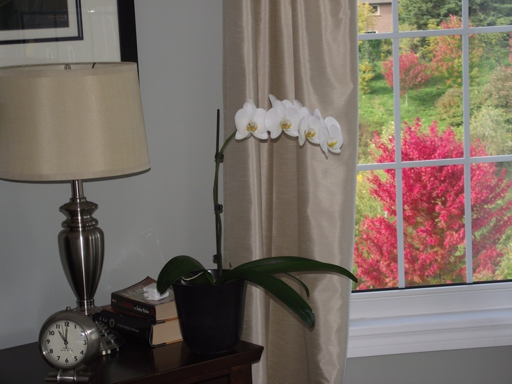 No.10 Fall 2012 #orchids #home