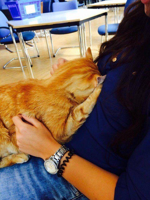 Die Katze erwärmt das Herz der Studenten der Uni Augsburg.