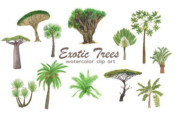 Exotic trees by ramika on @creativemarket