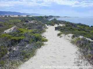 Año Nuevo State Park California State Parks, San Mateo County