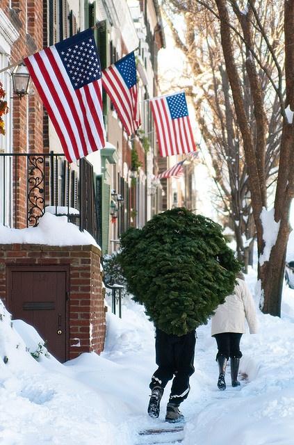 ღ taking Christmas tree home.