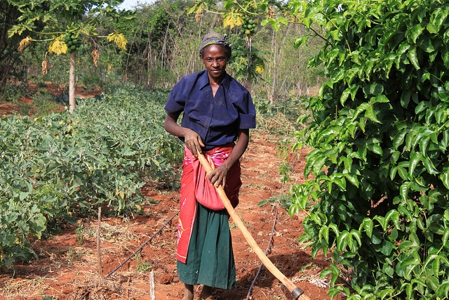 In Kitui, Eastern Kenya, Nyumbani is providing local growers with technical know-how and land to grow food. For more info go to www.nyumbani.org.uk