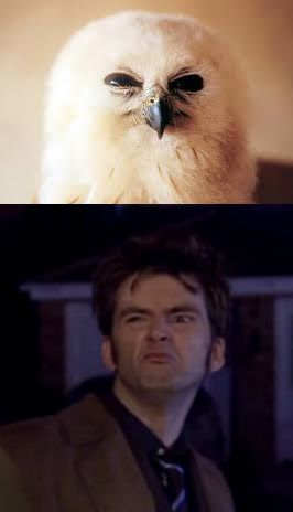 Only another reason why I love David Tennant, he can look like my favorite animal.