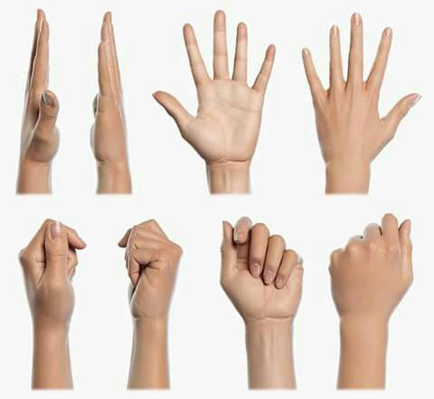 ( Hands / Anatomy )