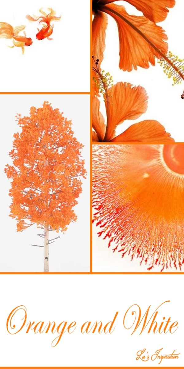 17 Best Images About Color Combo Orange And White On