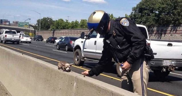 The police saved a pooch!